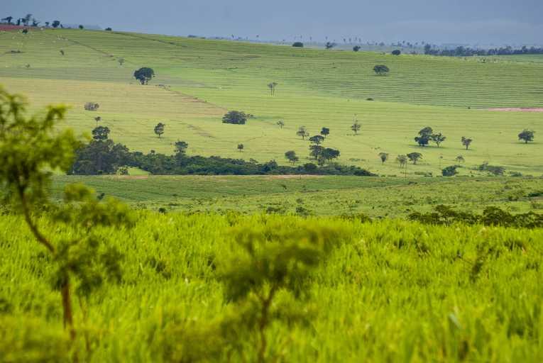 The Cerrado, Brazil