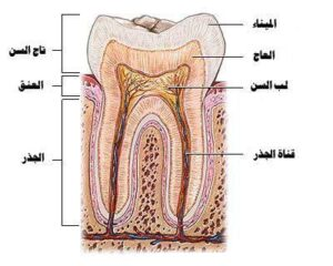ألم الأسنان من تناول الآيس كريم