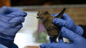 أصل فايروس كورونا من الخفافيش